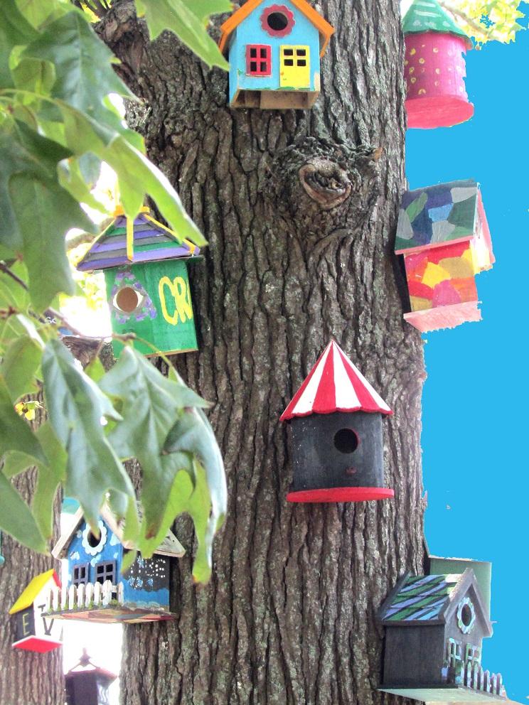 roger virginia cabanes oiseaux