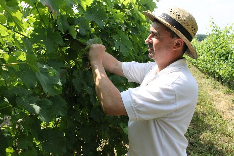 roger saumur julien fouet vigne