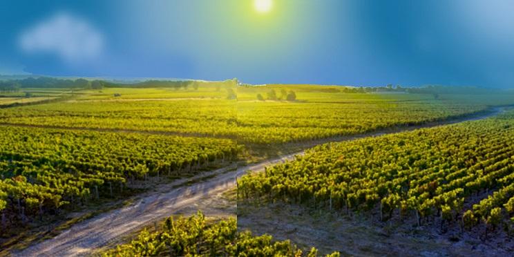 roger vignoble chateau larose perganson
