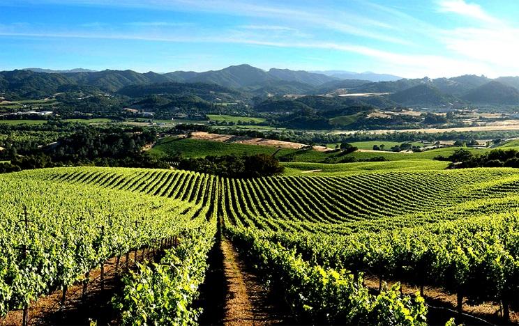 roger justin seidenfeld vineyard